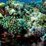 Big Island Snorkeling: Guide to Snorkeling on the Big Island of Hawaii