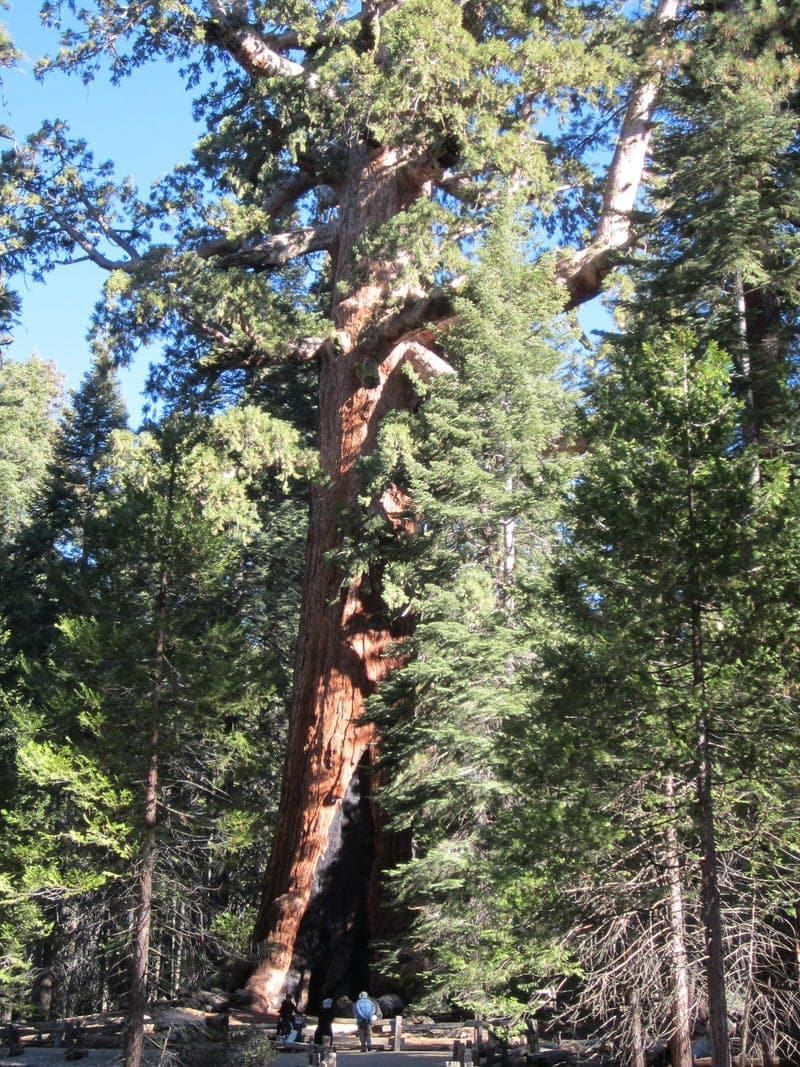 Yosemite National Park Wawona southern south entrance