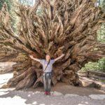 Top Five Things to do in the Southern Part of Yosemite National Park
