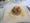 monkfish main dish