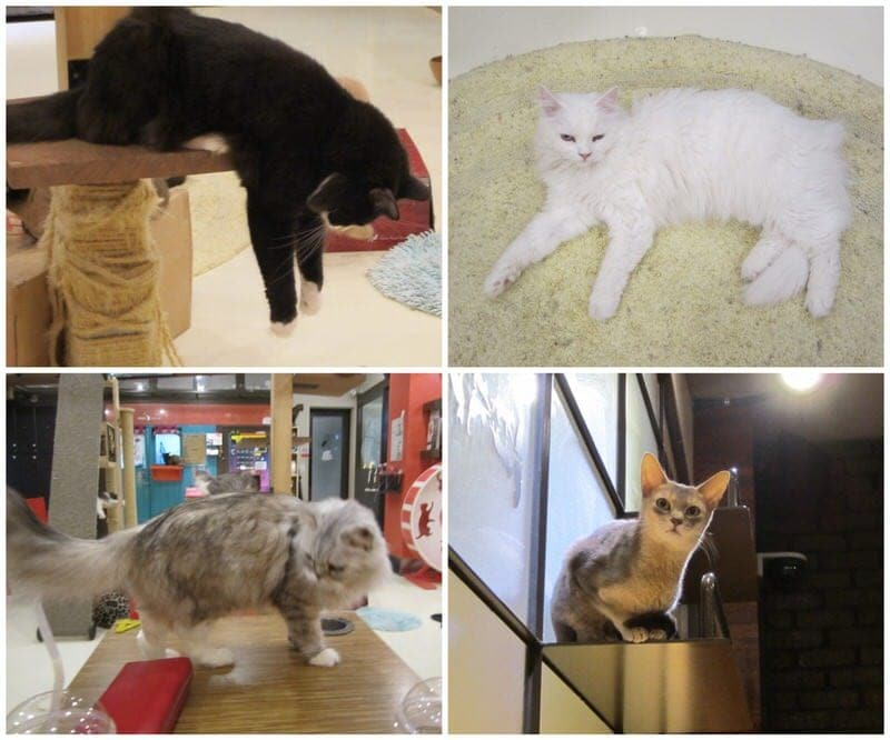 A few of the cats