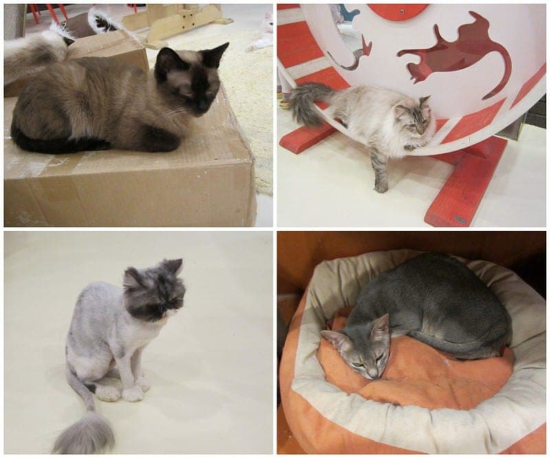 A few more of the kitties!