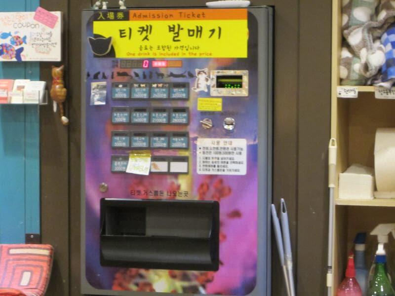 cat cafe in Seoul cat café in Korea