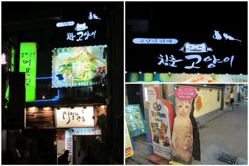 cat cafe in Seoul cat café in Korea y Cat Cafe
