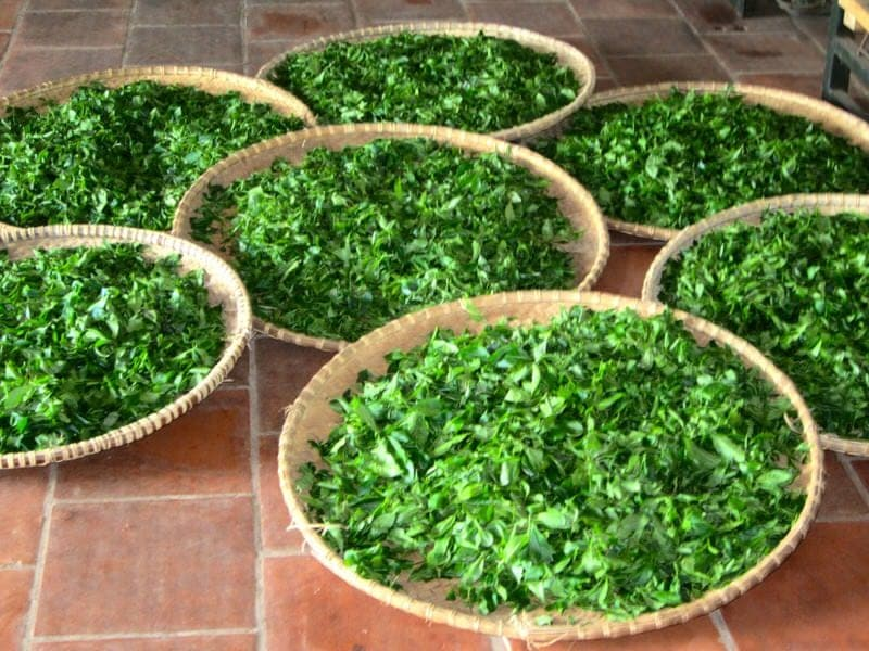 Thai Nguyen tea region Vietnam Footprint Travel tea tour from Hanoi