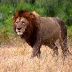Top 10 Things to do in the Serengeti