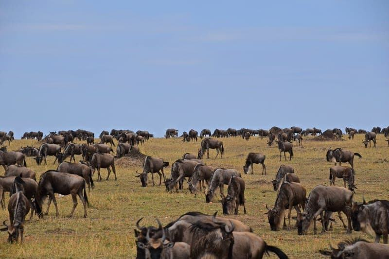 top things to do in Serengeti Tanzania best guide to Serengeti National Park