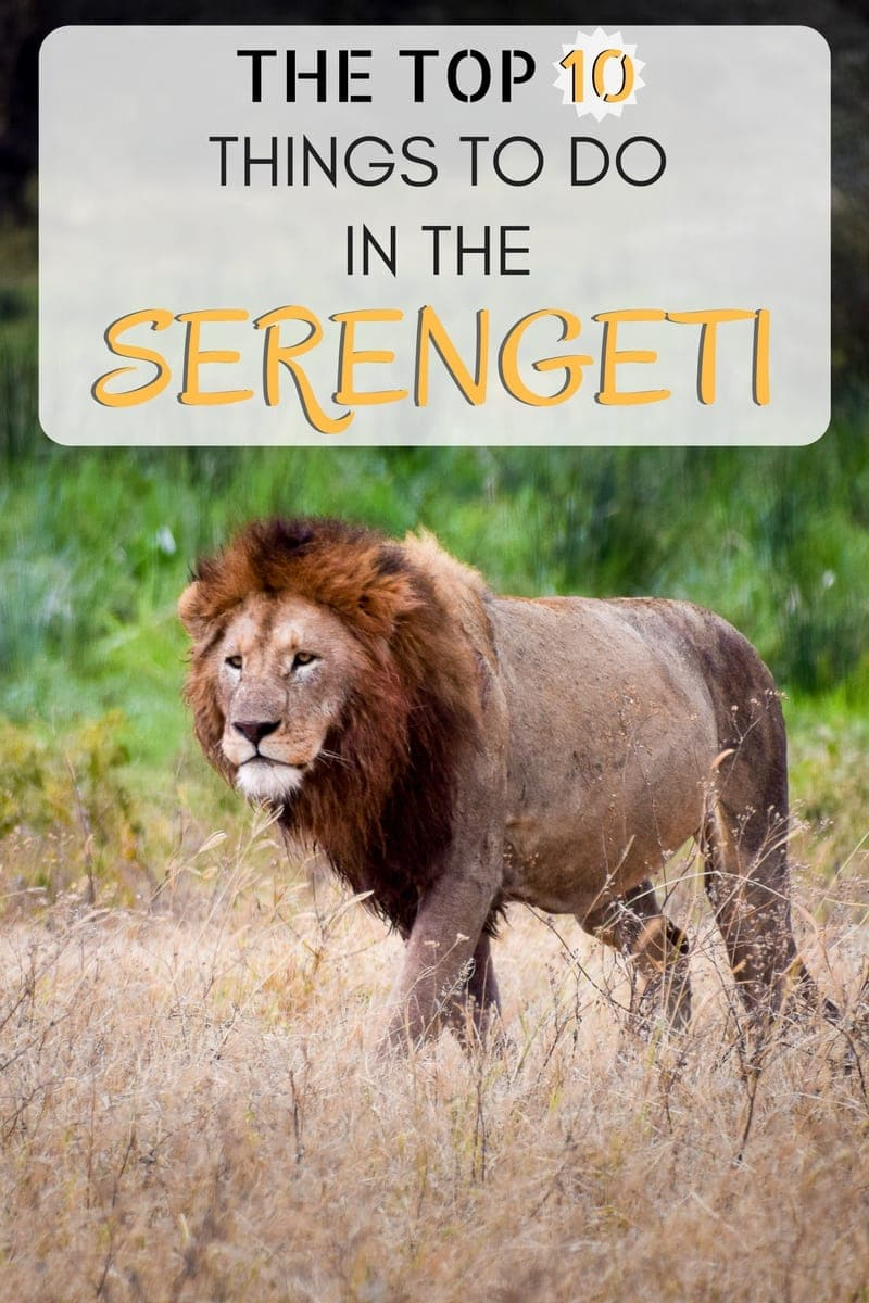 "A guide to the top things to do in Serengeti National Park in Tanzania. As one of the ""Seven Natural Wonders of Africa"" and the site of some excellent wildlife viewing and safari opportunities, it is a must-see for most travelers to Tanzania. In addition to traditional daytime game drives, walking safaris, night drives, hot air balloon rides, Massai village visits, and an educational stop at the Oldupai Gorge can also enhance a visit to the Serengeti."