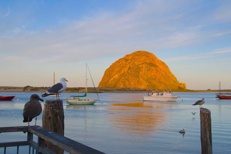 Morro-Bay-rock-birds