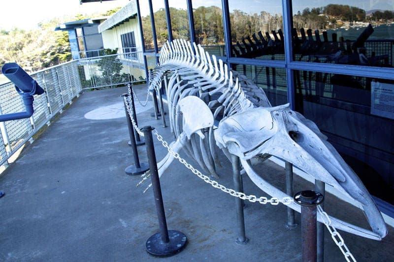 minke whale skeleton Morro Bay Museum of Natural History California