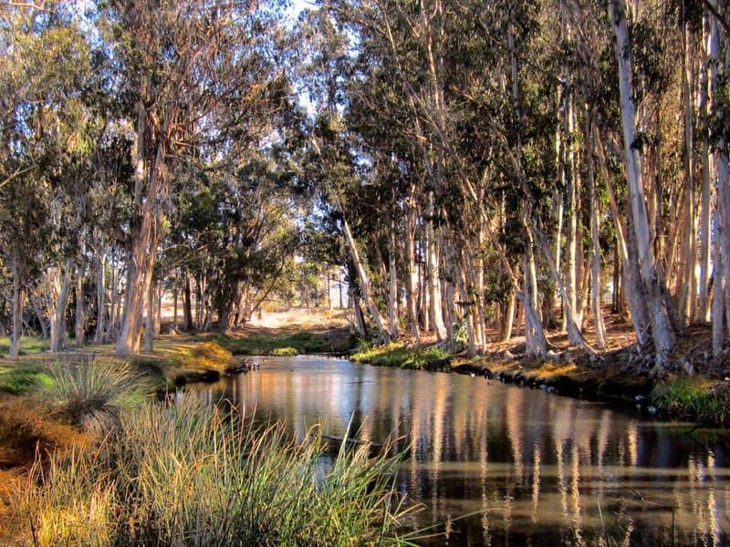 Audubon Sweet Springs Nature Preserve Los Osos