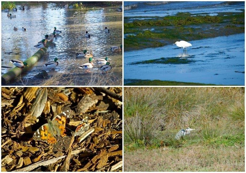 Audubon Sweet Springs Nature Preserve Los Osos birds