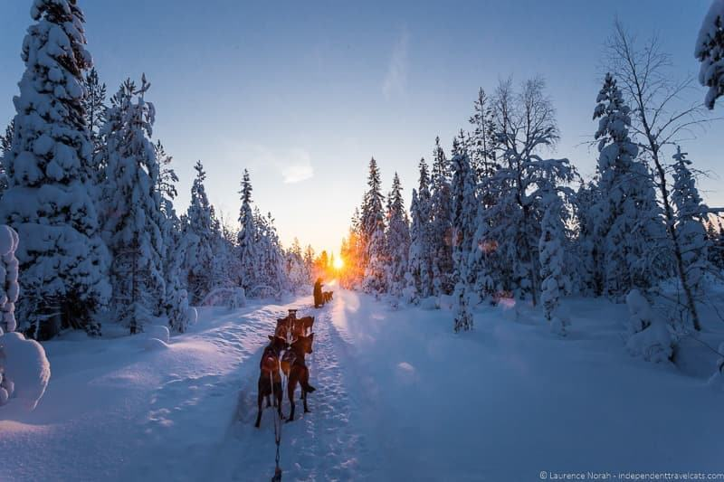 dog sledding visting Finland in winter