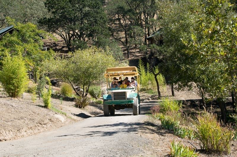 safari jeep at Safari West California