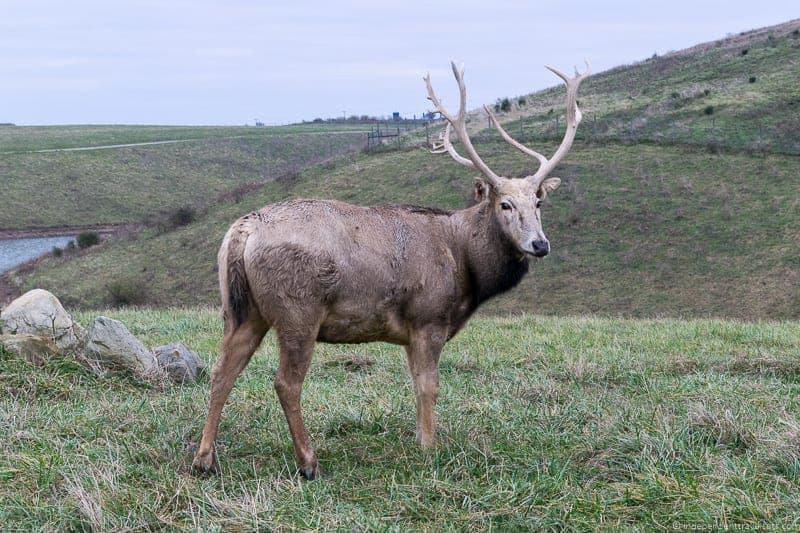 The Wilds Ohio Pere David's deer