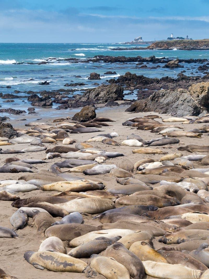 Elephant Seal rookery San Simeon California Pacific Coast Highway 1 road trip