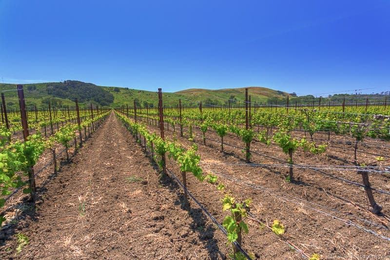 Stolo Family Vineyard Cambria California