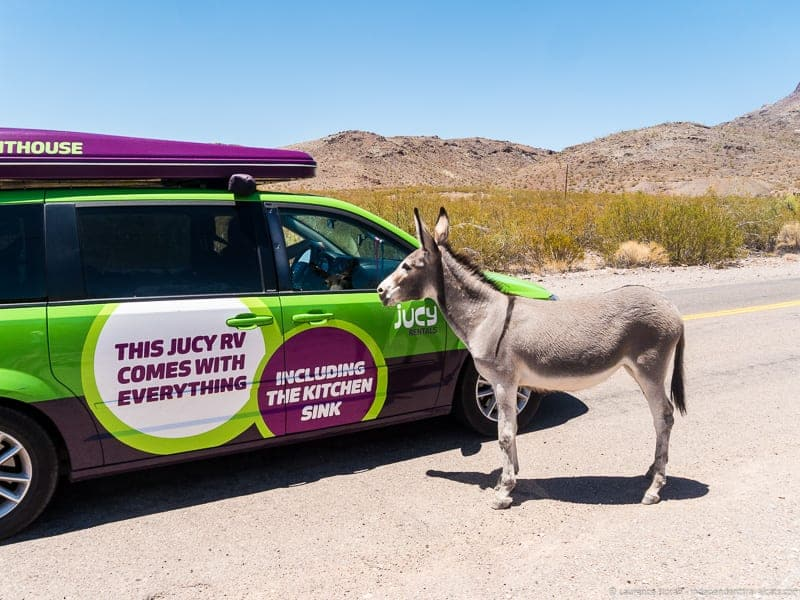 JUCY RV Oatman Arizona mule Route 66 road trip
