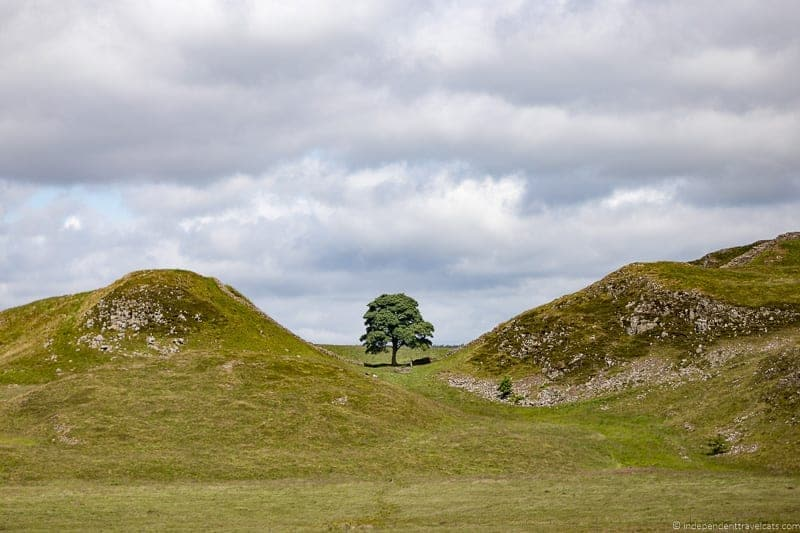 Sycamore Gap Scottish Borders highlights travel Rabbies