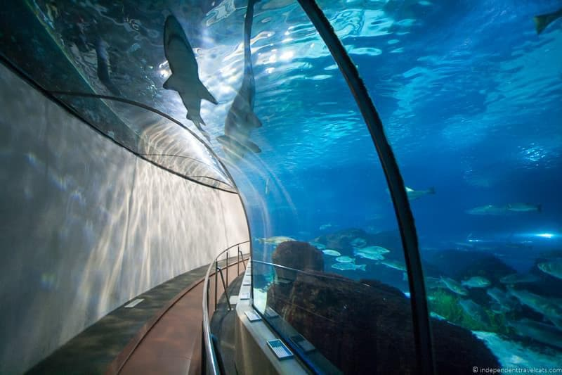 Aquarium buying The Go Barcelona Pass tips advice worth it