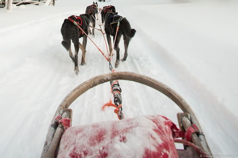 dogsledding Iceland in winter activities day trips tours