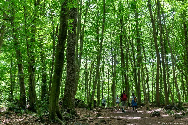 La Fageda d'en Jorda Beech forest La Garrotxa Pyrenees Catalonia Spain