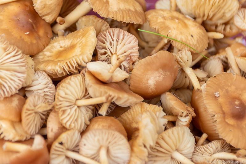 wild mushrooms La Garrotxa Pyrenees Catalonia Spain