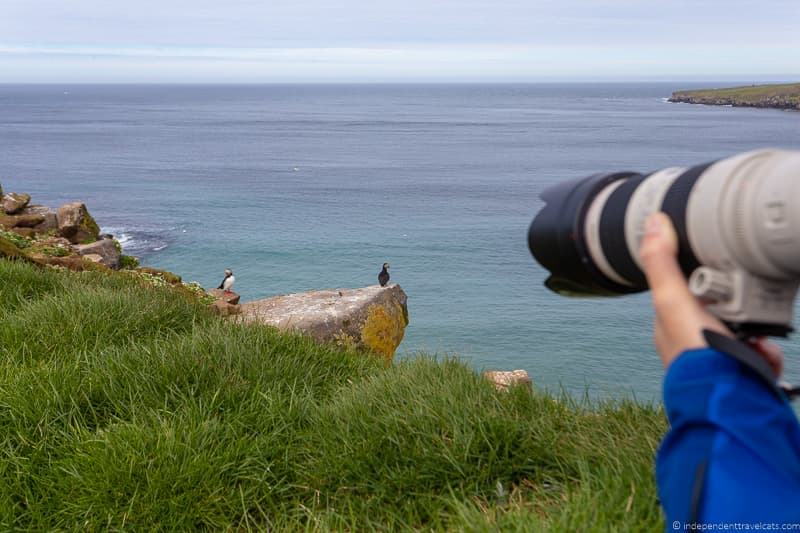 photography tips puffins in Iceland guide Iceland puffin