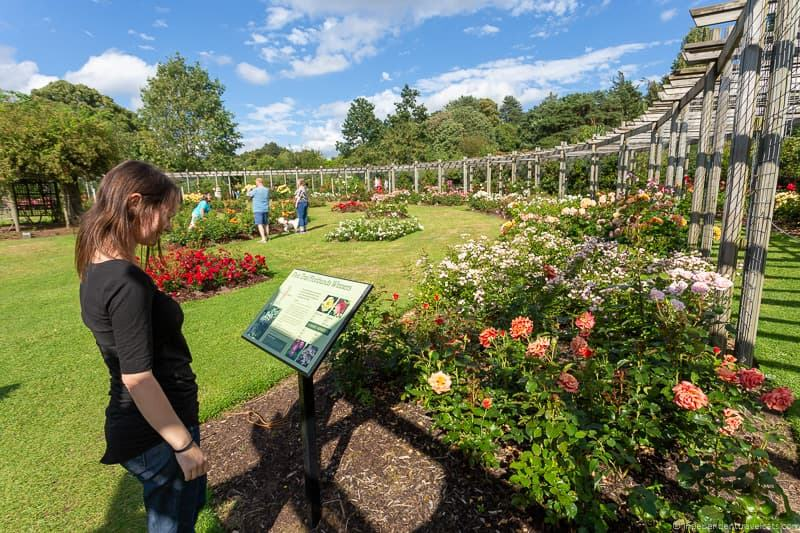 Sir Thomas & Lady Dixon Park rose garden things to do in Belfast Ireland travel guide