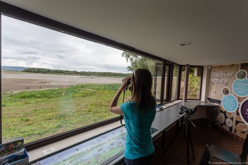 RSPB Window on Wildlife Belfast Lough Reserve things to do in Belfast Northern Ireland travel guide