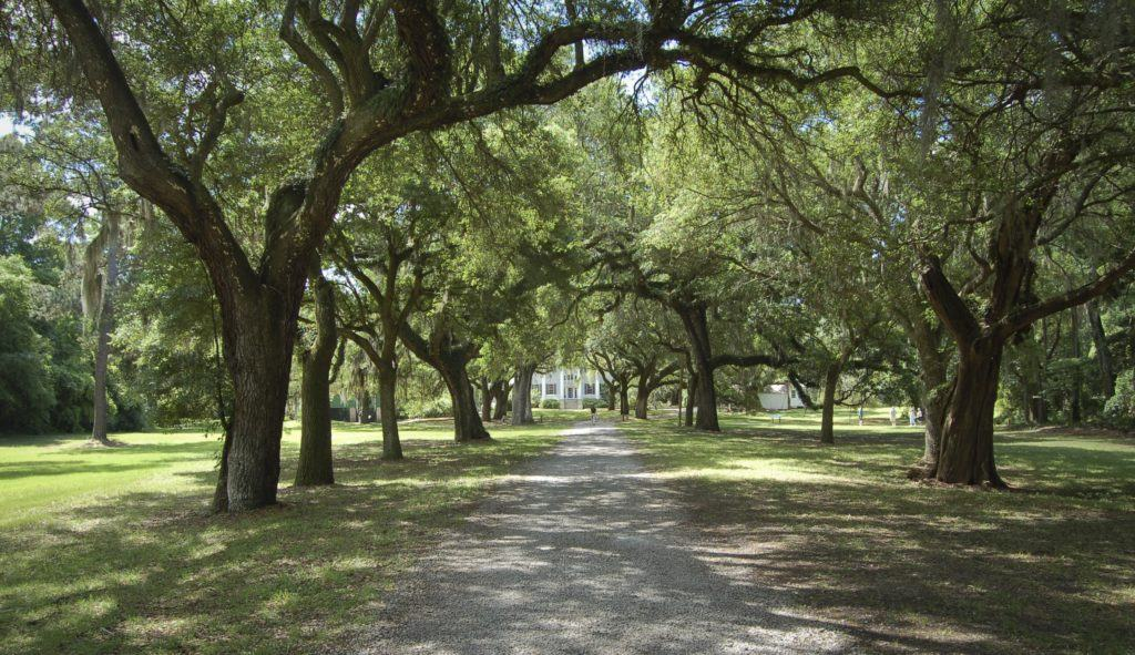 oak alley McLeod Plantation Historical Site Charleston plantations guide South Carolina plantation tours