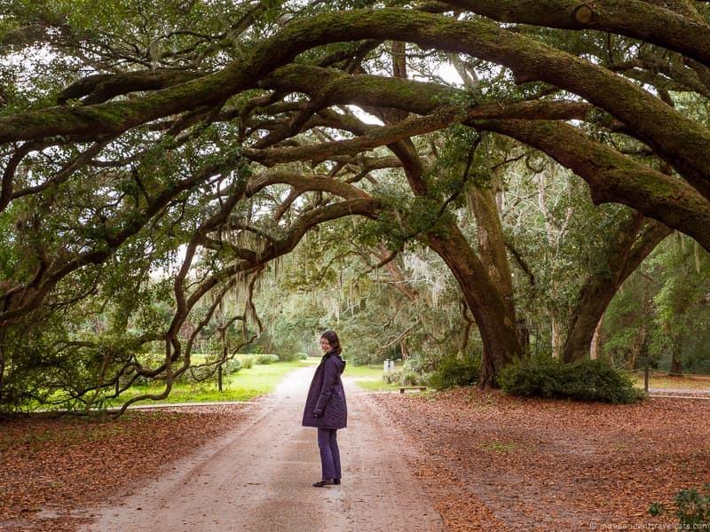Charleston Tea Plantation trolley Charleston plantations guide South Carolina plantation tours