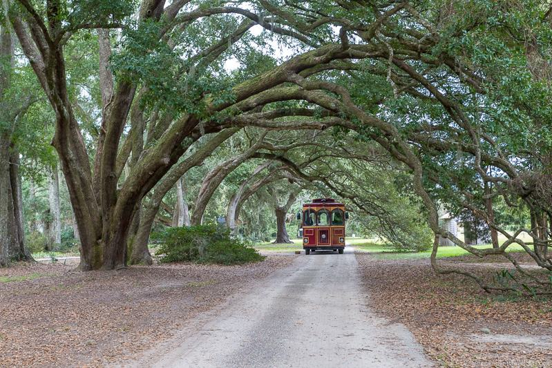 Charleston Tea Plantation trolley Charleston plantations guide South Carolina plantation tours