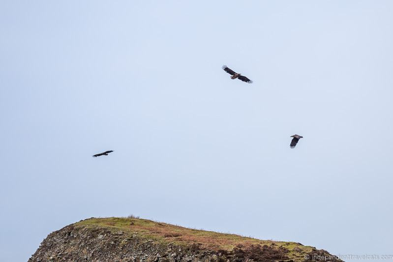 eagles birdwatching Isle of Raasay travel guide things to do on the Isle of Raasay