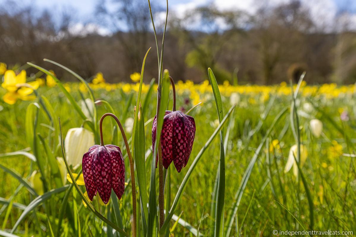 Highclere Castle wildflower meadow