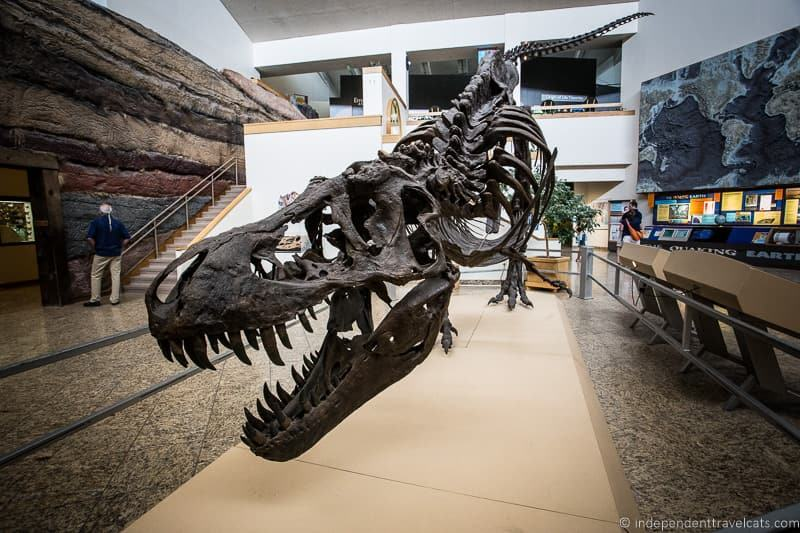 dinosaur museum museum donations to museums free entry museums supporting attractions while traveling