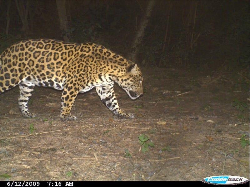 El Pantanoso Reserve Argentina World Land Trust Fundación Biodiversidad-Argentina