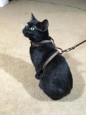 leather cat harness cat accessories made in USA